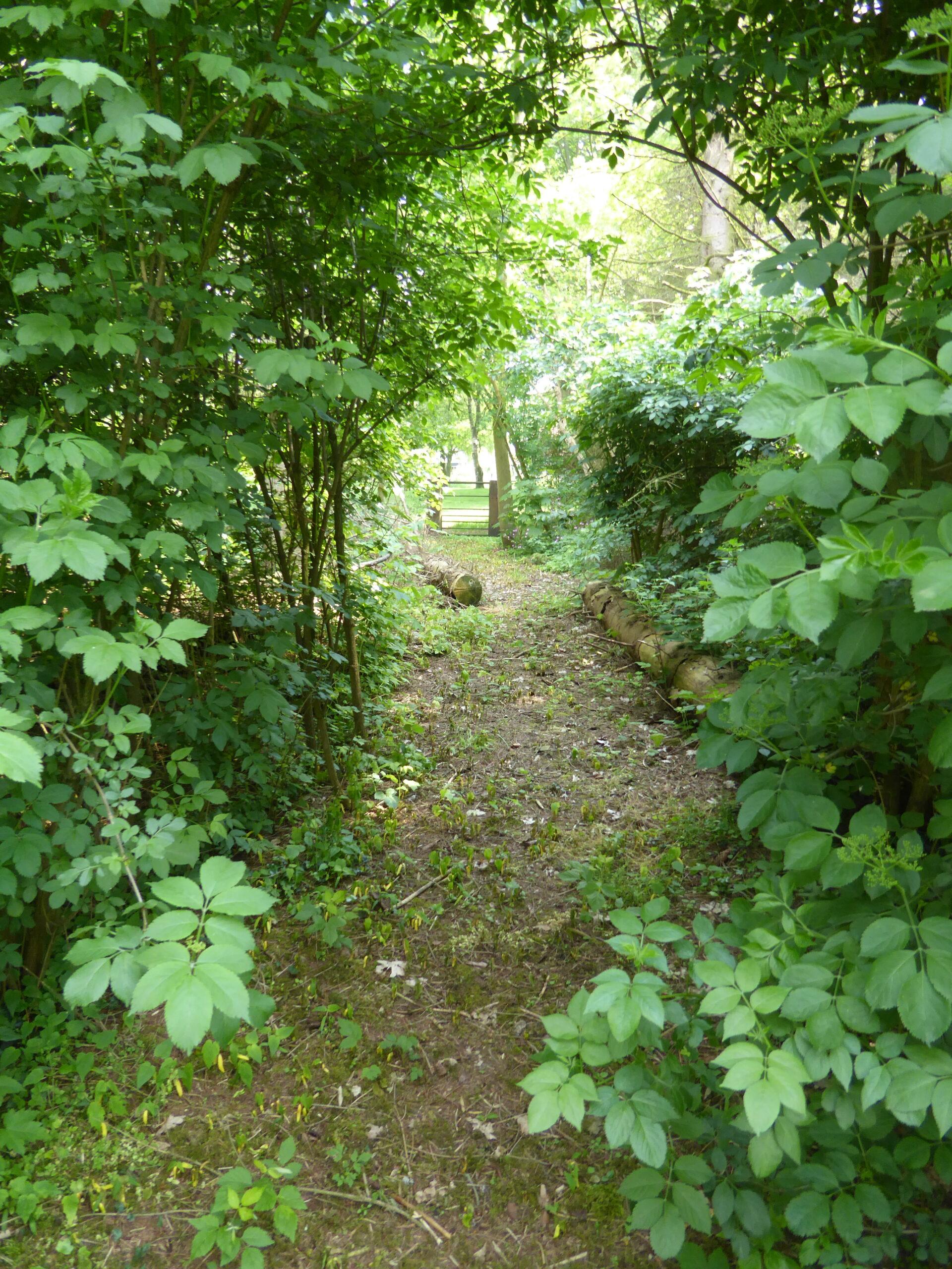 foto pad door bos